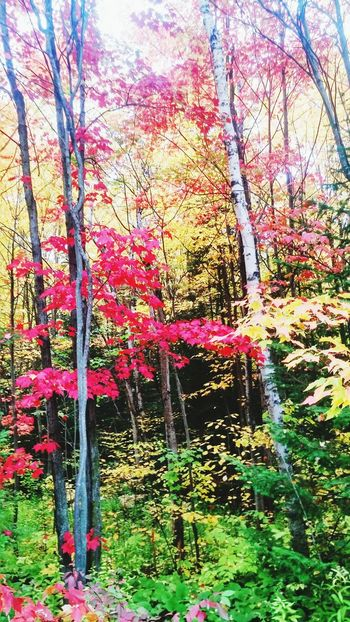 Fall Colors Northern Ontario On A Hike