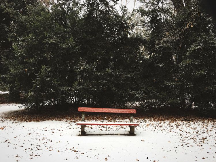 Park Bench Empty Bench Empty Red Snow Winter Cold Freezing No People Empty Seat