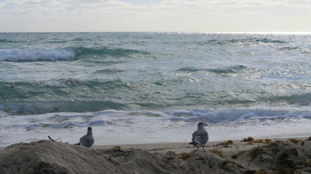 Beach Bird Miami Beach Miami, FL No People Outdoors Sand Sea
