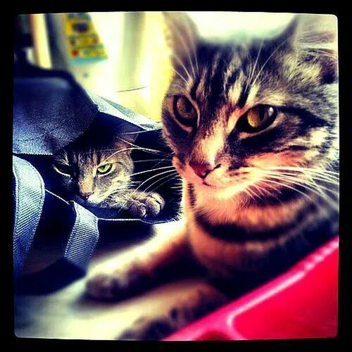 Pets Cats Bill&ted