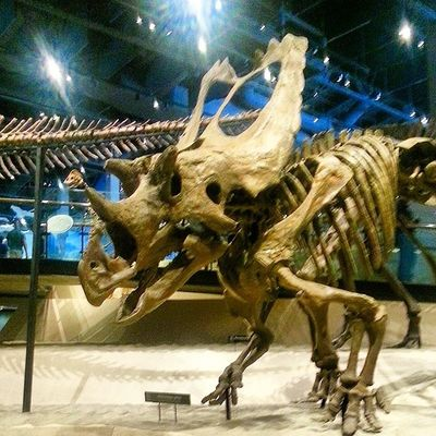 If you ever go to Salt Lake don't miss the Natural History Museum of Utah