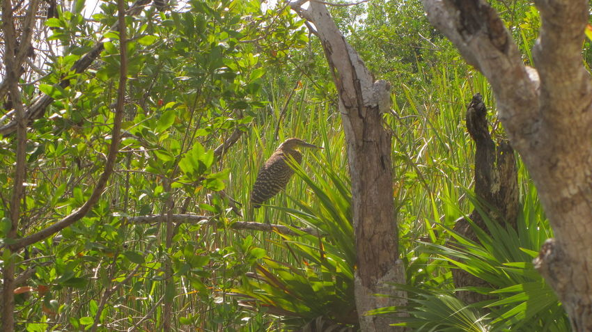 Laguna Nopalitos Nature Photography Tulum , Rivera Maya. Animal Themes Animal Wildlife Animals In The Wild Bird Branch Day Freshwater Bay Green Color Growth Leaf Mammal Nature No People One Animal Outdoors Perching Tree Tree Trunk