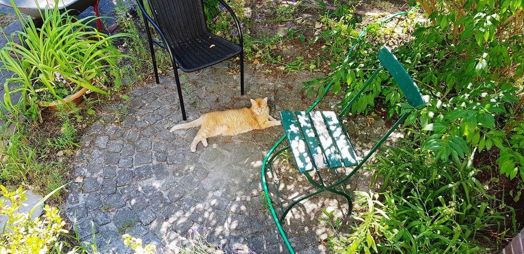 Cat relaxing in