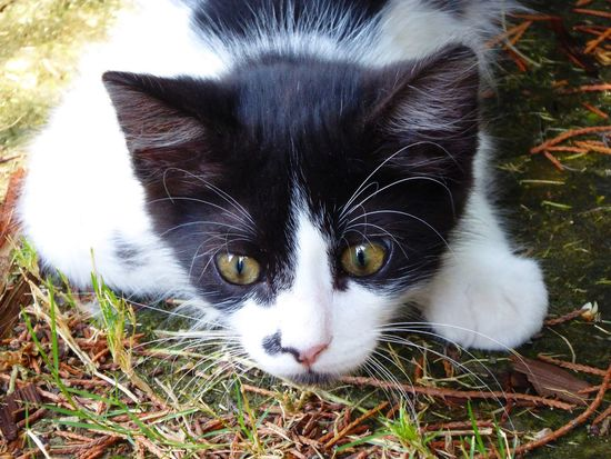 Cats Cats Of Rhodes Kittens Exploring Stalking Cat Make Believe Prey Black And White Cat Blackandwhitecat Cutecats Cutecat Cute Cats Cute Cat Selfie... Cat Selfie