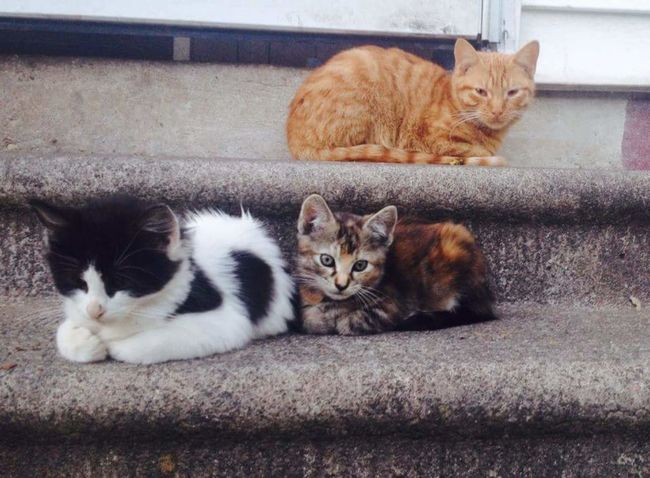 They are so little! Cats Of EyeEm Kittensofinstagram Cute Pets Calicocat Calico Cats Tuxedo Cats Gingercat OrangeCats