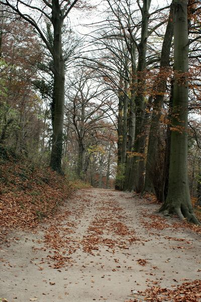 Tree Plant The Way Forward Forest Direction Tranquility Land Nature No People Day Beauty In Nature Growth Change Outdoors Autumn colors Autumn Footpath See What I See Walking Around Taking Pictures South-limburg Valkenburg Nature Nature_collection River Leaves