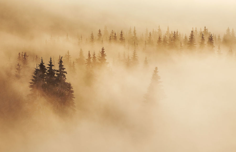 Winter landscapes with Rodnei Mountains, Romania. Alpine Ice Light Morning Nature Trees Weather Winter Beauty Cold Fog Foggy Forest Landscape Mist Mountain Pine Tree Scenics Season  Snow Sunrise Tranquil Scene Treetops White Perspectives On Nature