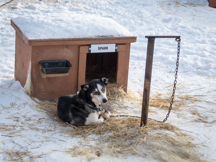 SPARK Animal Portrait Animal Themes Canada Cold Temperature Day Dog Doghouse Looking At Camera Nature No People One Animal Outdoors Sitting Sled Dog Snow Wilderness Wilderness Adventure Wilderness Area Wildernessculture Winter Winter