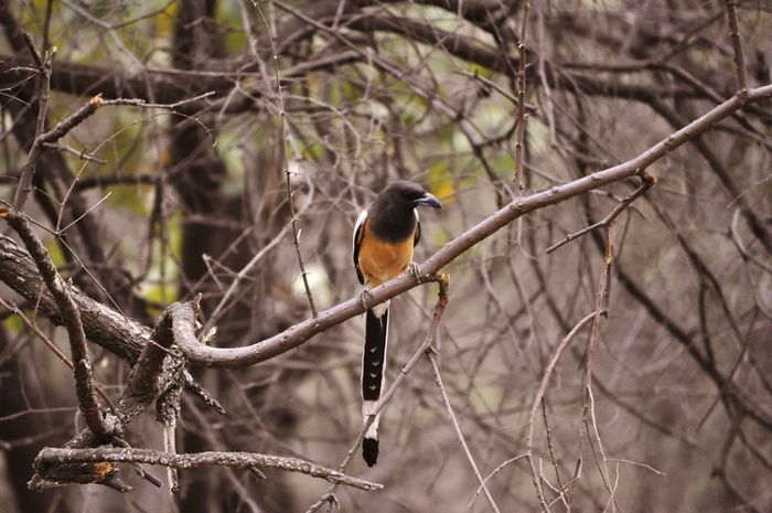Bird Birds In Wild Bird Photography Birds Birds_collection Ranthambore Ranthambore National Park India