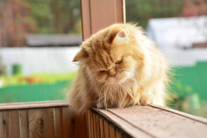 Cat Relaxing On Porch