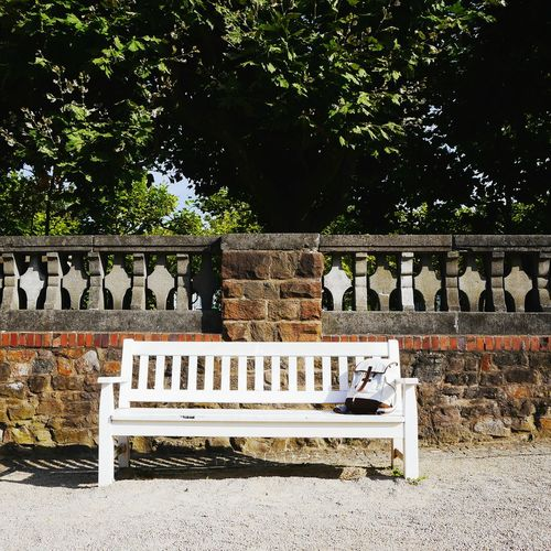 simple Things... Bench Wooden Bench Timbered Bench Full Frame White Bench Treesagainstwall Bench Against Wall