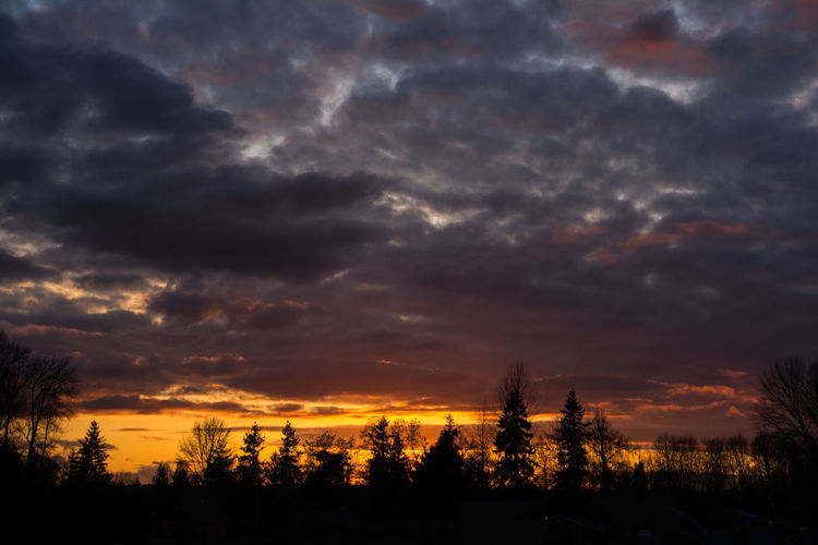 Silhouette of trees against cloudy sky during sunset