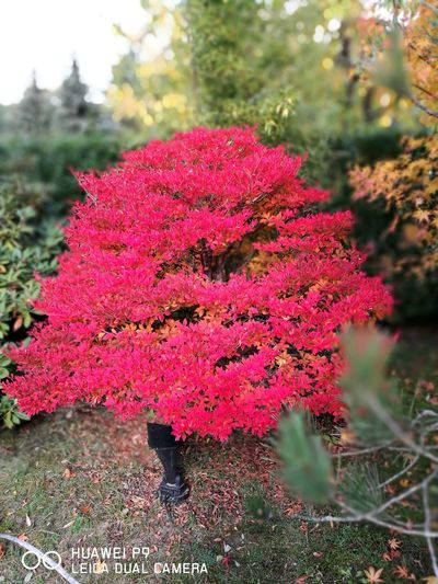 Red Nature Tree Outdoors No People Day Travel Destinations Beauty In Nature Plant Autumn Close-up Freshness Growth Flower Fragility