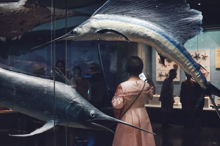 Animal Wildlife Animals In The Wild Architecture Day Fish Glass - Material Group Of People Incidental People Indoors  Lifestyles People Real People Rear View Representation Transparent Vertebrate Women