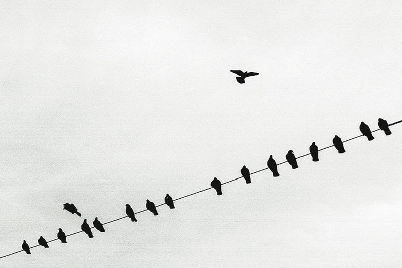 Urban Black & White City Birds Flying Wire Budapest Cityscapes Nature Animals