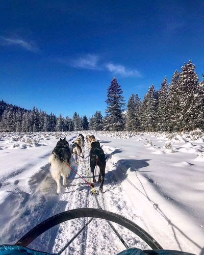 Dog sledding Zerodegrees Snow Winter Sled Dog Dog Cold Temperature Transportation Working Animal Domestic Animals Nature Sled Mode Of Transport Pets Animal Themes Adventure Field Beauty In Nature Mammal Day Tree Teamwork An Eye For Travel An Eye For Travel