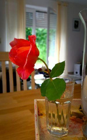 Good morning my dear coffee... Taking Photos Check This Out Enjoying Life Enjoying Life Rose🌹 Rose - Flower Coffee Time Breafkfast