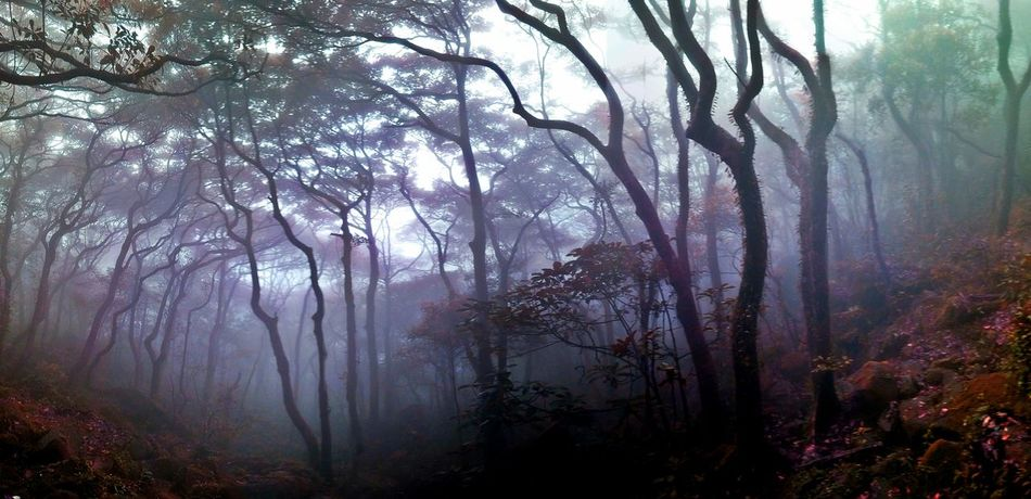 Foggy Hiking Hong Kong Mysterious Nature