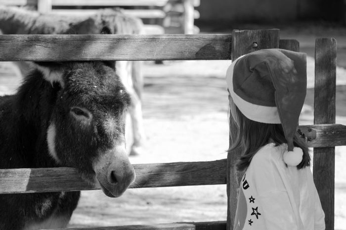 Donkey Donkeys Little Girl Cutness Kids Being Kids Kidsphotography Animal Love Black & White EyeEm EyeEm Best Shots EyeEm Bnw EyeEmBestPics Animal Themes Black And White Blackandwhite Blackandwhite Photography Bnw Eye4photography  Monochrome Nature Outdoors Close-up Standing Focus On Foreground