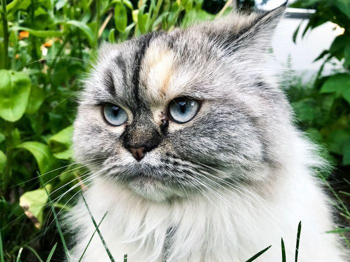 Cat Eyes Cats