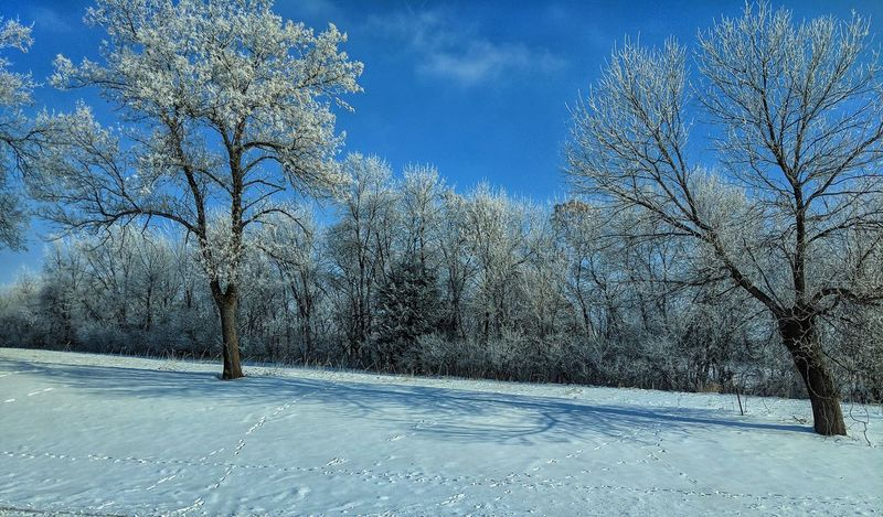 Frost Frosty Tree Snow Winter Cold Temperature Blue Sky Countryside Snow Covered Cold White Weather Condition Non-urban Scene Tranquil Scene Idyllic Remote Tranquility Bare Tree