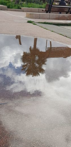 reflection Water Day No People Tree Road Puddle Sky