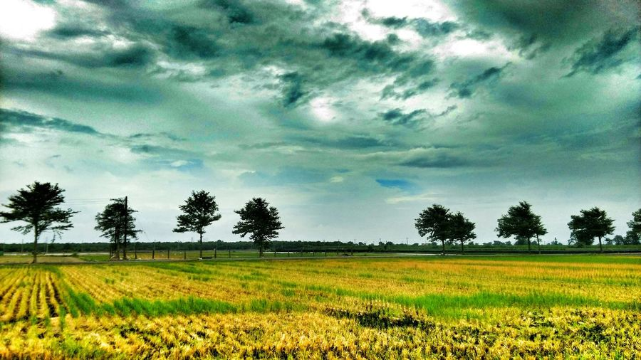 Relax. Taking Photos Relaxing Check This Out Country Country Life Enjoying Life Enjoying The View Enjoying Nature Rice Field Sky And Clouds