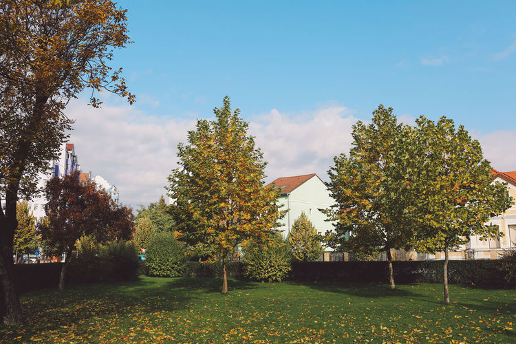 Autumn Blue Colors Day Landscape Nature No People Outdoors Sky Sunny Day Tree