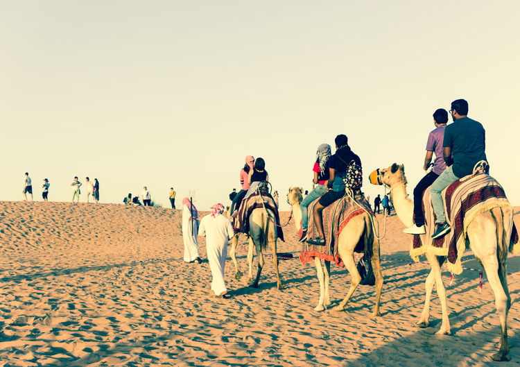 Camel Camel Riding Competition Dessert Dessert Safari Desssert Friendship Full Length Group Of People Men Outdoors People Popular Photos Real People Safari Sand Adapted To The City Sports Race Summer Sunset Track And Field Athlete The Week On Eyem Deserts Around The WorldTraveling Vacations The Great Outdoors - 2017 EyeEm Awards