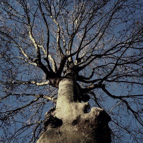 Blanckandwhite Trees AMPt_community