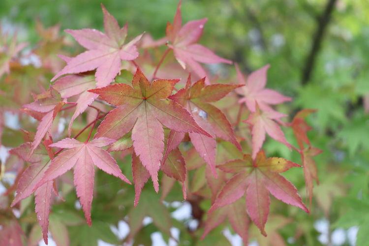 秋の訪れ Flower
