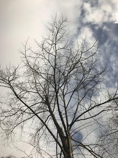 Bare Tree Low