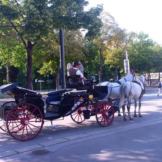 И снова Кони и снова фонарь и вновь любимый город Вена Австрия лето отпуск Vien Austria