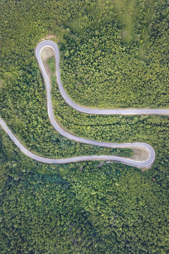 High angle view of snake on road