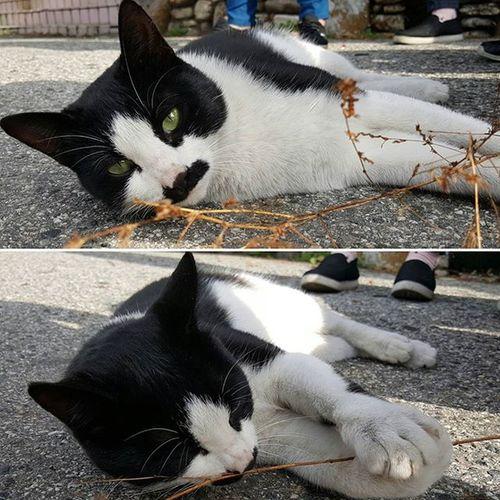 휴게소 앞 마당을 자기 집 거실처럼 이용중인 냥이~ 나른~~~😌 냥이 휴게소주인 고양이 Cat 뒹구르르 냥스타그램