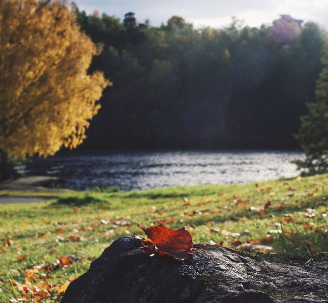 Nature Beauty In Nature Tree Leaf Water Autumn Tranquility No People Focus On Foreground Change Day Close-up Outdoors Sea Tranquil Scene Scenics Beach Grass Growth