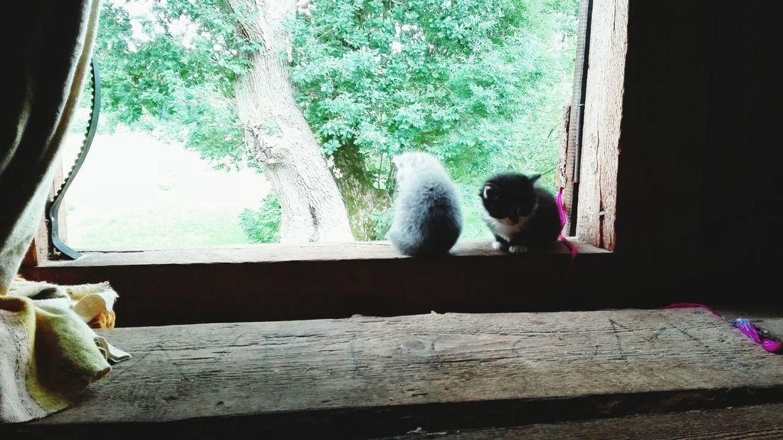 Cats Nature Cuties