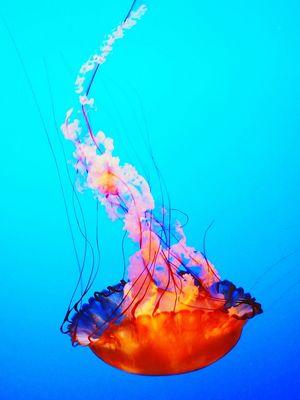 Gatlinburg Tn Ripley's Aquarium . Jellyfish My Best Photo 2015 Check It Out