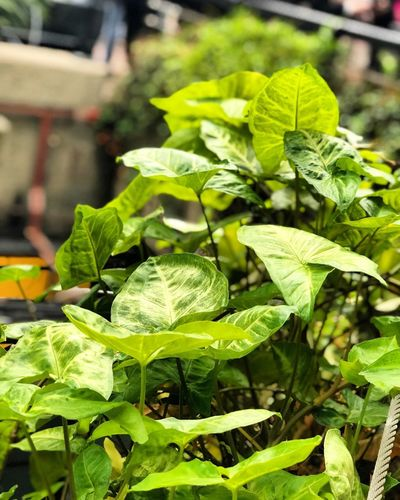 Foliage at Barbican Foliage Green Barbican Green Color Leaf Growth Freshness Food And Drink Plant Outdoors Nature No People Day Focus On Foreground Beauty In Nature Close-up