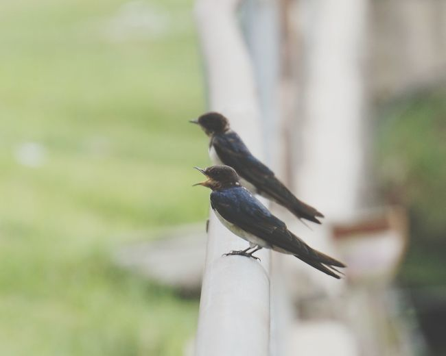 Animal Wildlife Nature Day Bird Beauty In Nature Outdoors Bird Singing