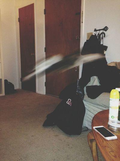 Calico Cat Action hahahaha
