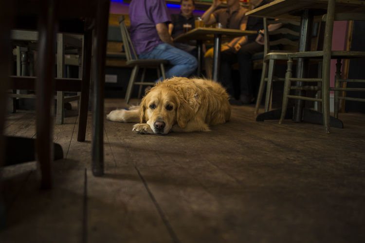 Animal Friendly Animal Friendly Bar Animal Themes Animals Welcome Bar Cafe Chair Dog Dog Friendly Dog Lying On Floor Dogs Of EyeEm Dogslife Domestic Animals Friendship Looking At Camera Lying Down One Animal People Pets Pub Public House Sitting Table Wooden Floor