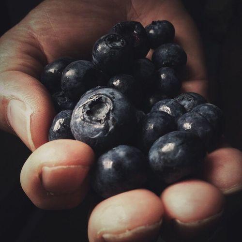 blueberries General Studies Still Life