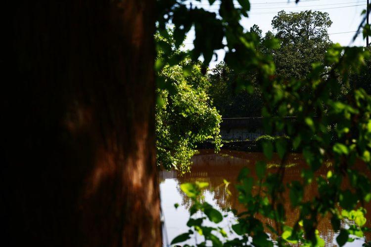 Water Greenery