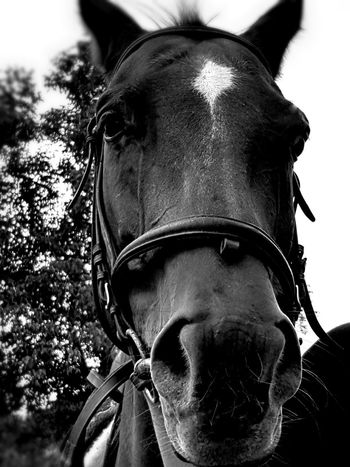 Nature Outdoors Day Horse Domestic Animals Blackandwhite Country Country Life One Animal No People Close-up Cellphone Photography Taking Photos Enjoying Life Countryfair