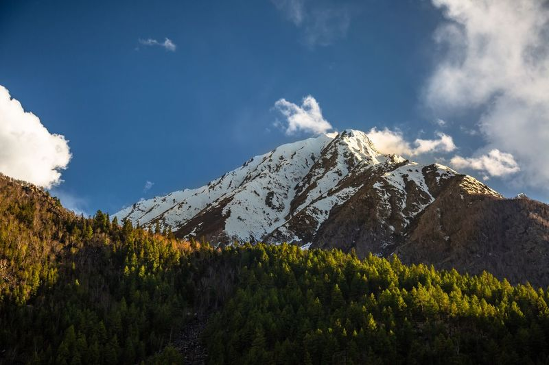 Sunset shades in Spiti. The Great Outdoors - 2019 EyeEm Awards The Traveler - 2019 EyeEm Awards Sky Mountain Cloud - Sky Beauty In Nature Scenics - Nature Plant Tranquil Scene Tranquility Nature No People Landscape Environment Non-urban Scene Snow Snowcapped Mountain Tree Idyllic Day Growth Winter