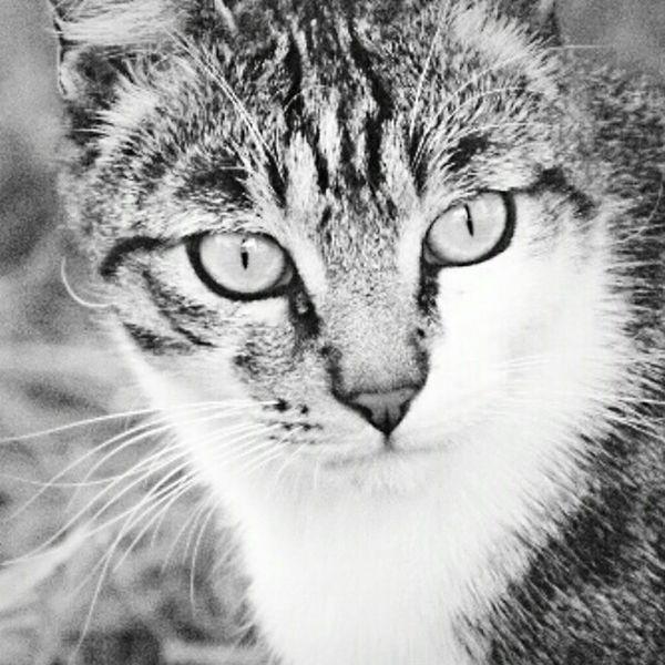 Pets Corner Sguardo  Gatto O-o-Occhi Di Gatto  Miciomiao Cat♡ Gattino MicioGatto Gatto😸 Meow