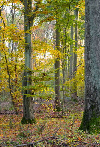 Commomswood in Autumn Autumn Autumn Colors Forest Outdoors Tree Tree Trunk WoodLand Woods