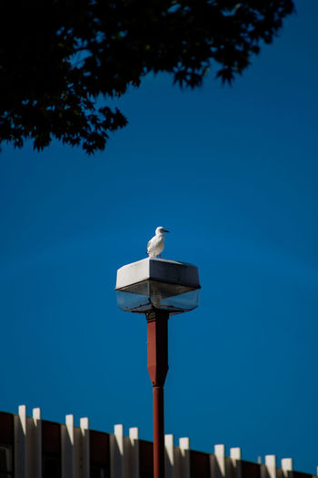 A seagull At The Market. Sunlight Outdoors Architecture
