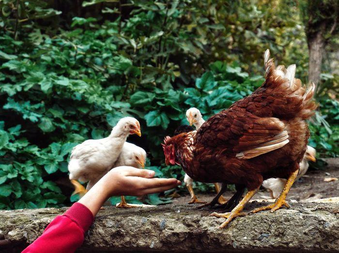 Feeding the locals